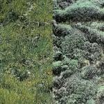 Варио картон, 300 g/m2, 50 x 70 cm, 1л, мъх и поляна/сено и ливада